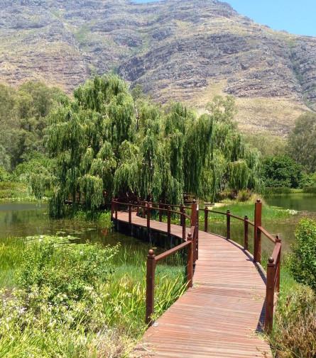 Africa de Sud_Capetown_Stellenbosch