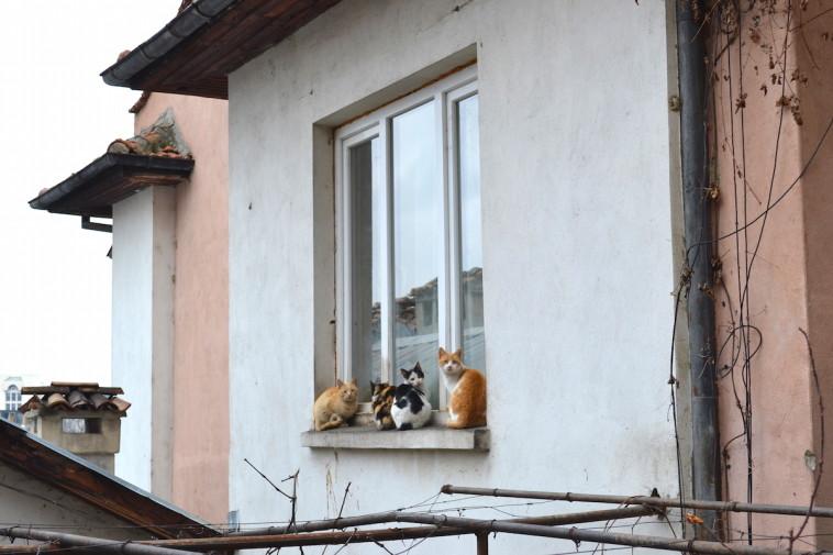 Veliko Tarnovo 16_Cats 1
