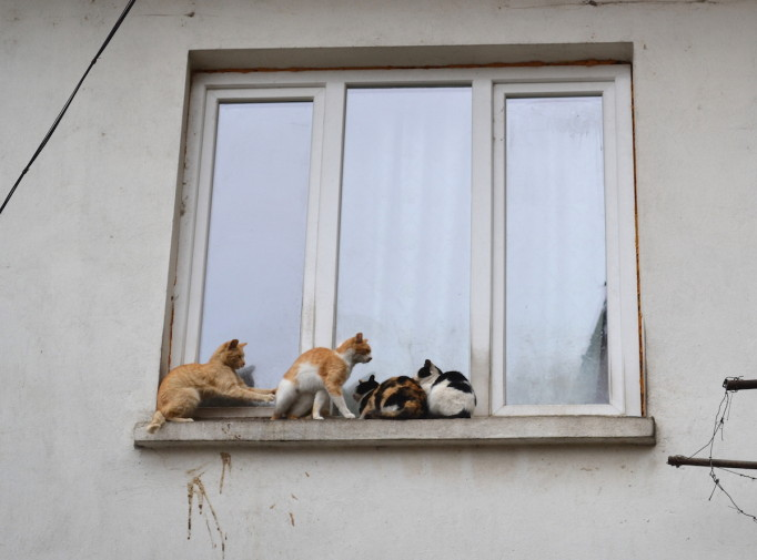 Veliko Tarnovo 16_Cats 2