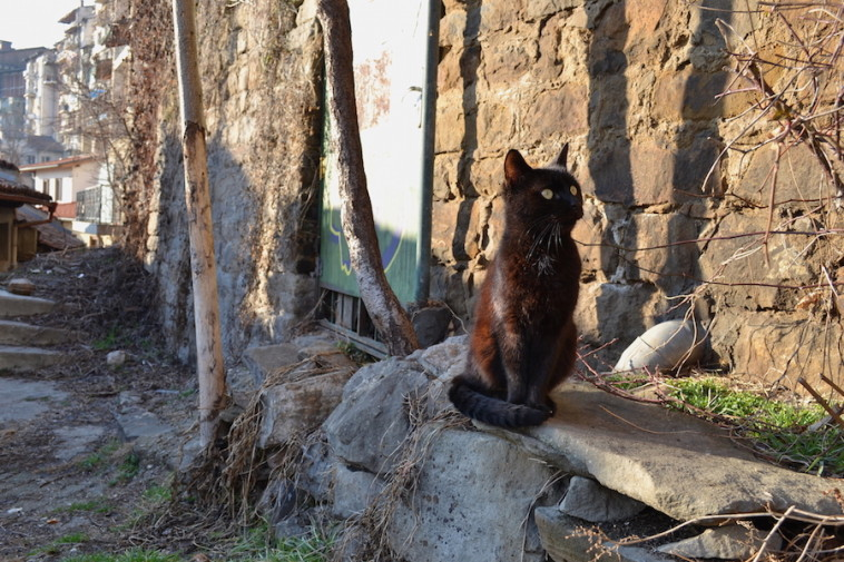 Veliko Tarnovo 16_Cats 4