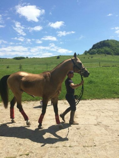 Transylvania Horse Show 2016_5