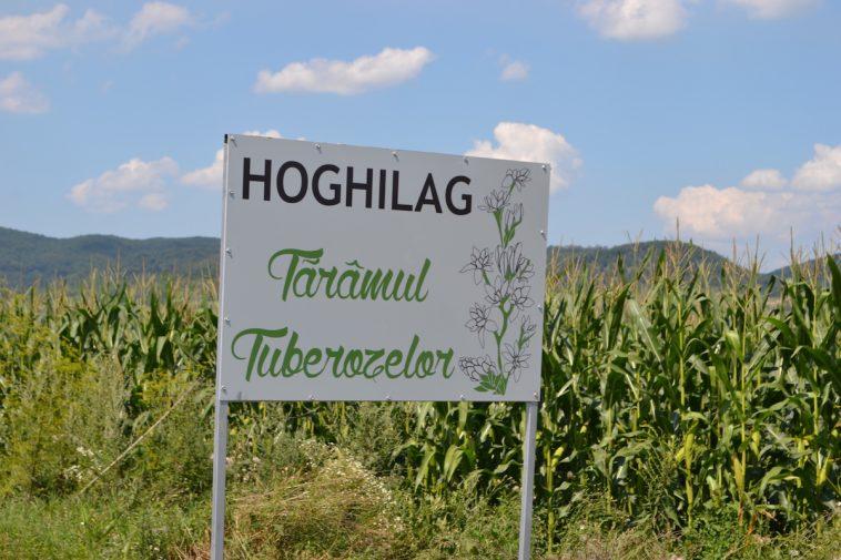 Hoghilag_Noaptea tuberozelor 1