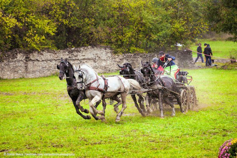 karpatia-horse-show-9