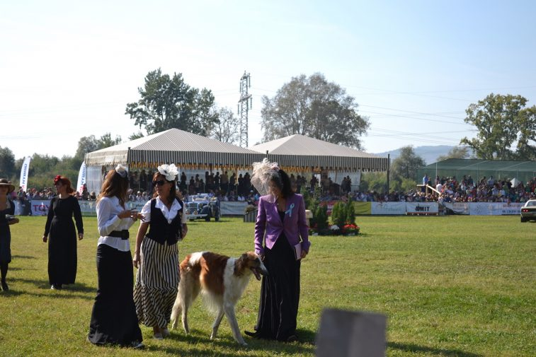 karpatia-horse-show-2016-27