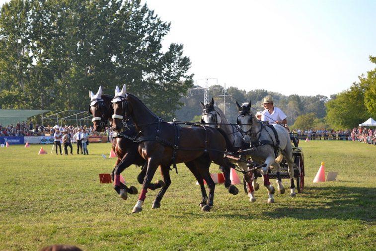 karpatia-horse-show-2016-36