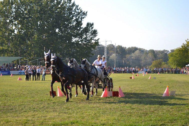 karpatia-horse-show-2016-38