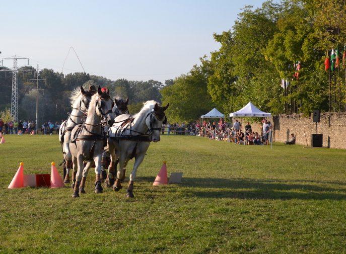 karpatia-horse-show-2016-40