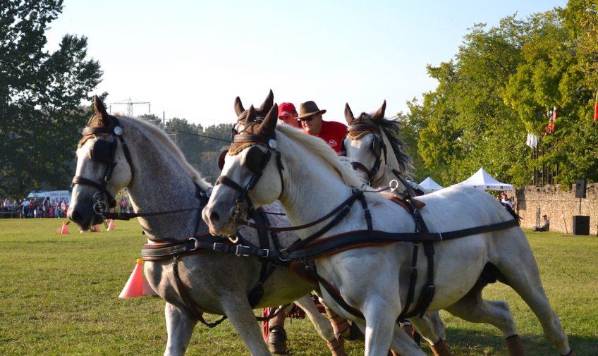 karpatia-horse-show-2016-41_header