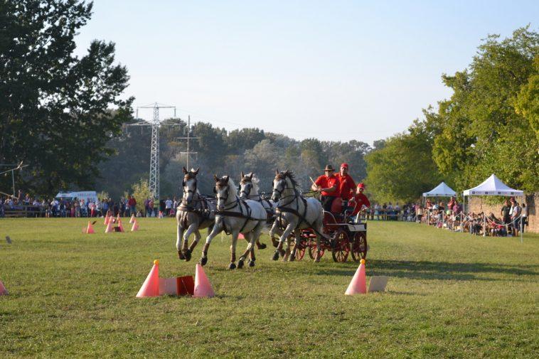 karpatia-horse-show-2016-42