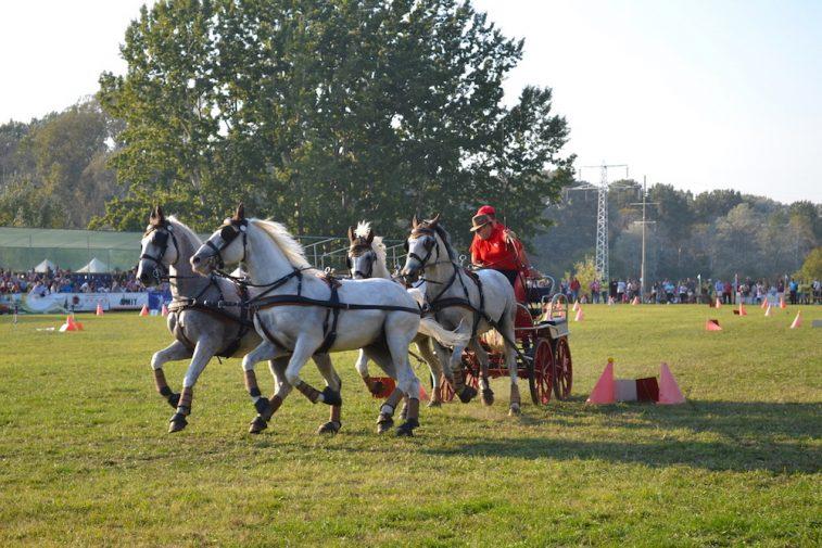 karpatia-horse-show-2016-43