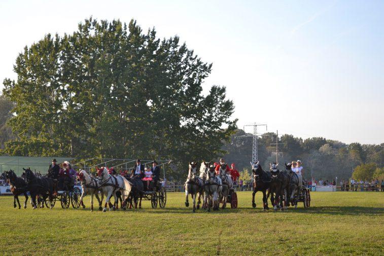 karpatia-horse-show-2016-46