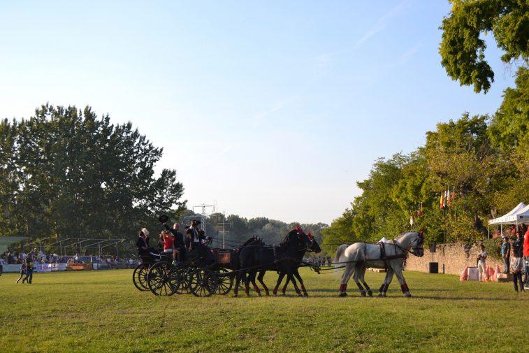 karpatia-horse-show-2016-48