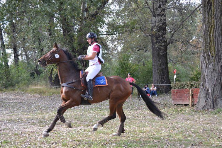karpatia-horse-show-2016-5