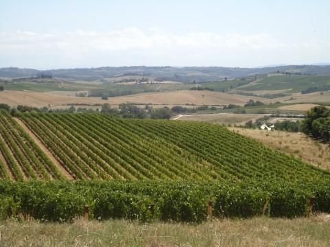 Toscana 13