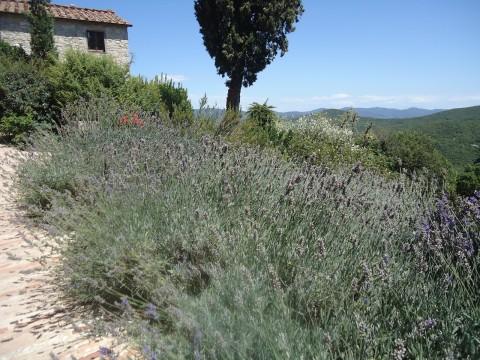 Toscana 15