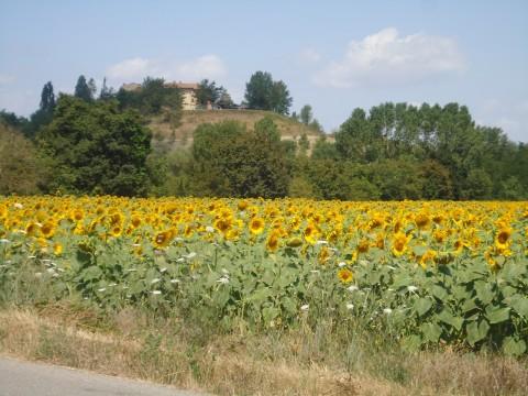 Toscana 5