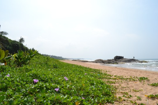 Sri Lanka_Bentota 25
