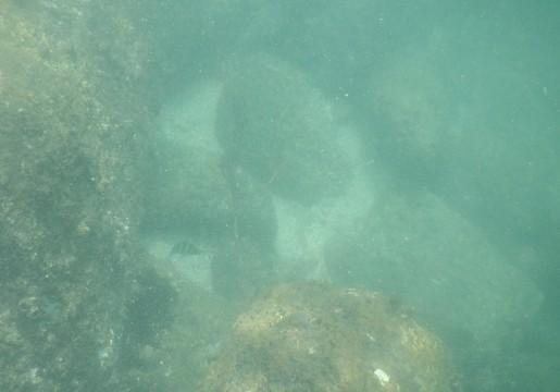 SL_snorkeling Bentota 20