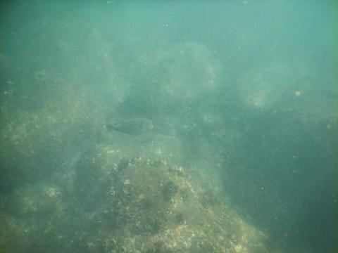 SL_snorkeling Bentota 24