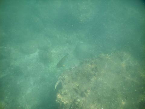 SL_snorkeling Bentota 25