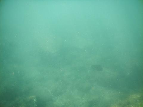 SL_snorkeling Bentota 26