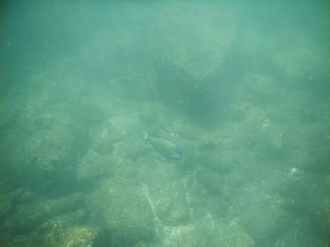 SL_snorkeling Bentota 27