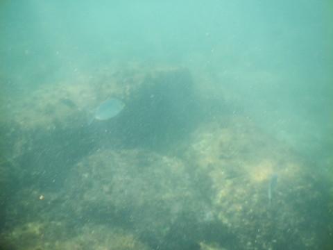 SL_snorkeling Bentota 31