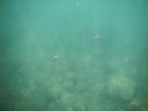 SL_snorkeling Bentota 33