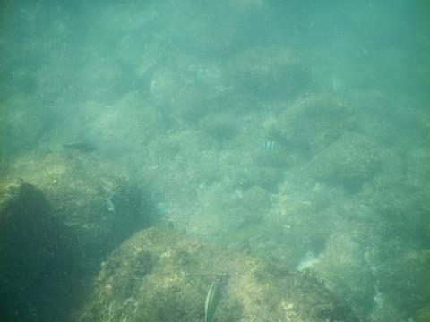 SL_snorkeling Bentota 35