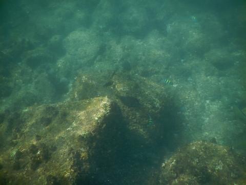SL_snorkeling Bentota 36