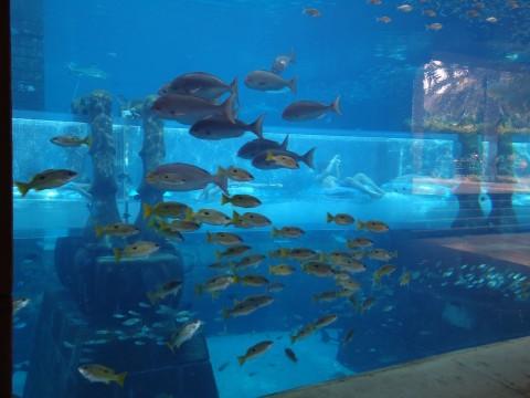 Dubai_Atlantis 38
