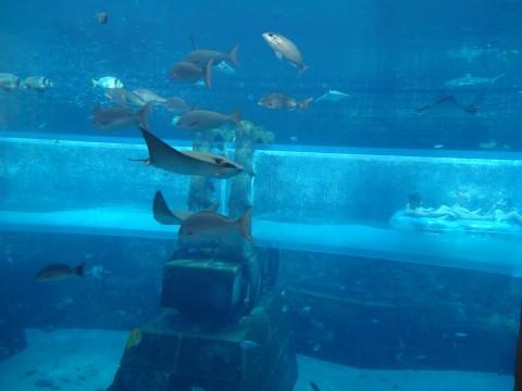 Dubai_Atlantis 41