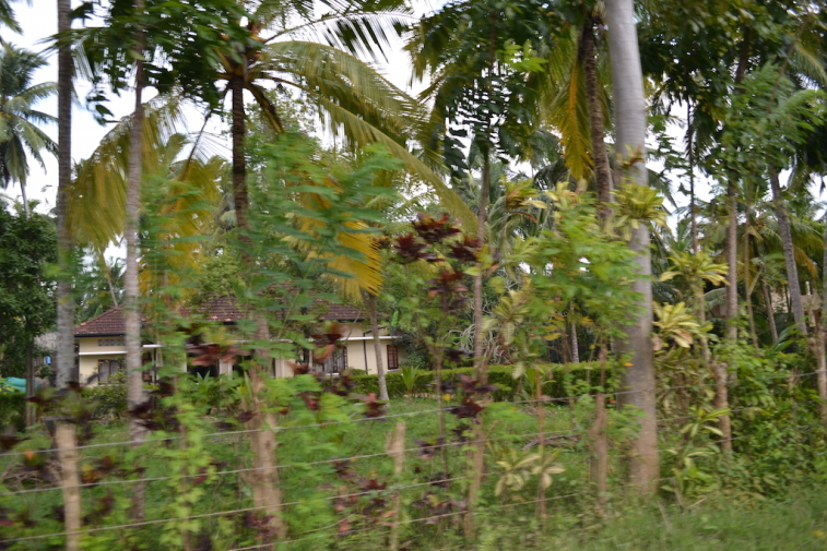 Sri Lanka 2014_0
