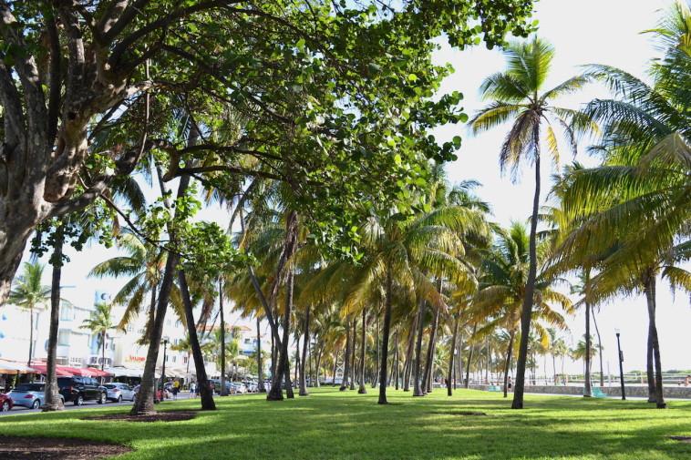 Miami Beach_beach 6