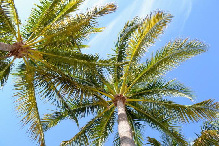 Miami Beach_beach 7