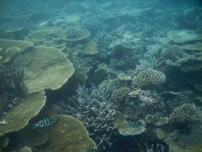 Maldive_28 dec_4