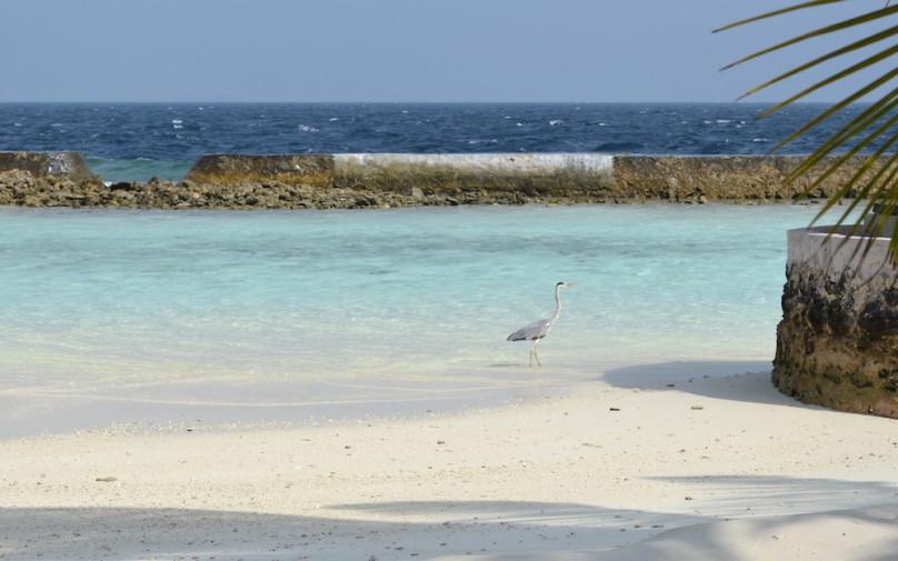 Maldive_culori 25