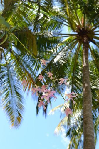 Maldive_culori 44