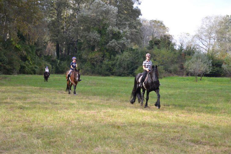 karpatia-horse-show-2016-11