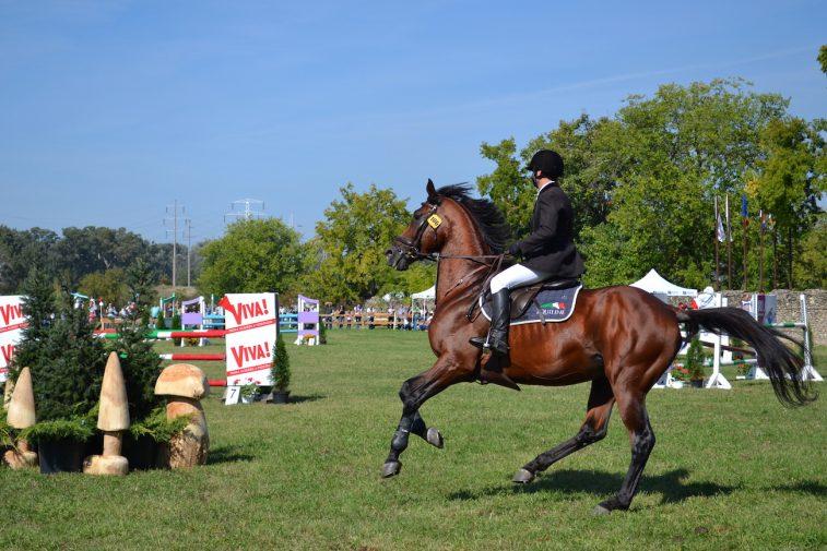 karpatia-horse-show-2016-15