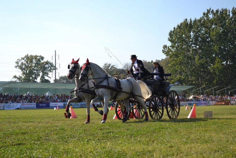 karpatia-horse-show-2016-32