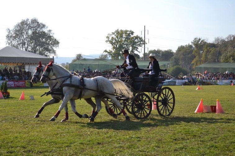 karpatia-horse-show-2016-33