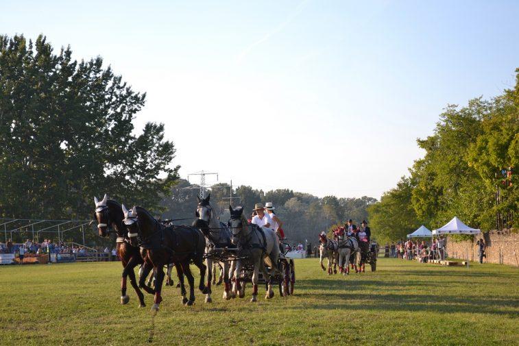 karpatia-horse-show-2016-44