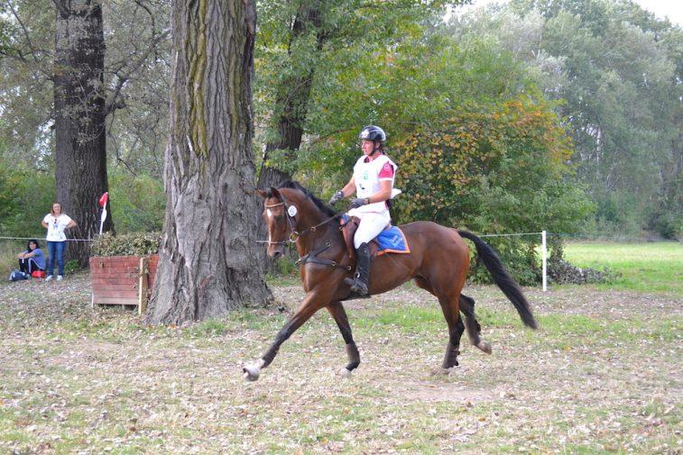 karpatia-horse-show-2016-7